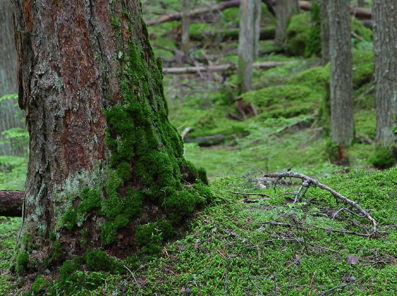 moss on the north side